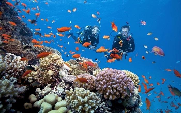 Trải nghiệm thú vị khi lặn sâu dưới đáy biển
