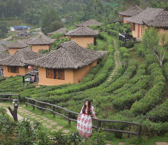 Đồi chè cổ ở Pai- Thái Lan