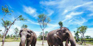 Công viên voi