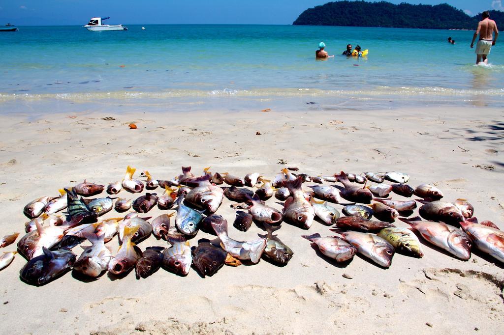 Đảo Koh Phayam